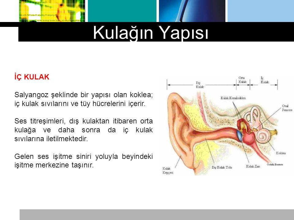 Kulağın Yapısı İÇ KULAK Salyangoz şeklinde bir yapısı olan koklea; iç kulak sıvılarını ve tüy hücrelerini içerir. Ses titreşimleri, dış kulaktan itiba