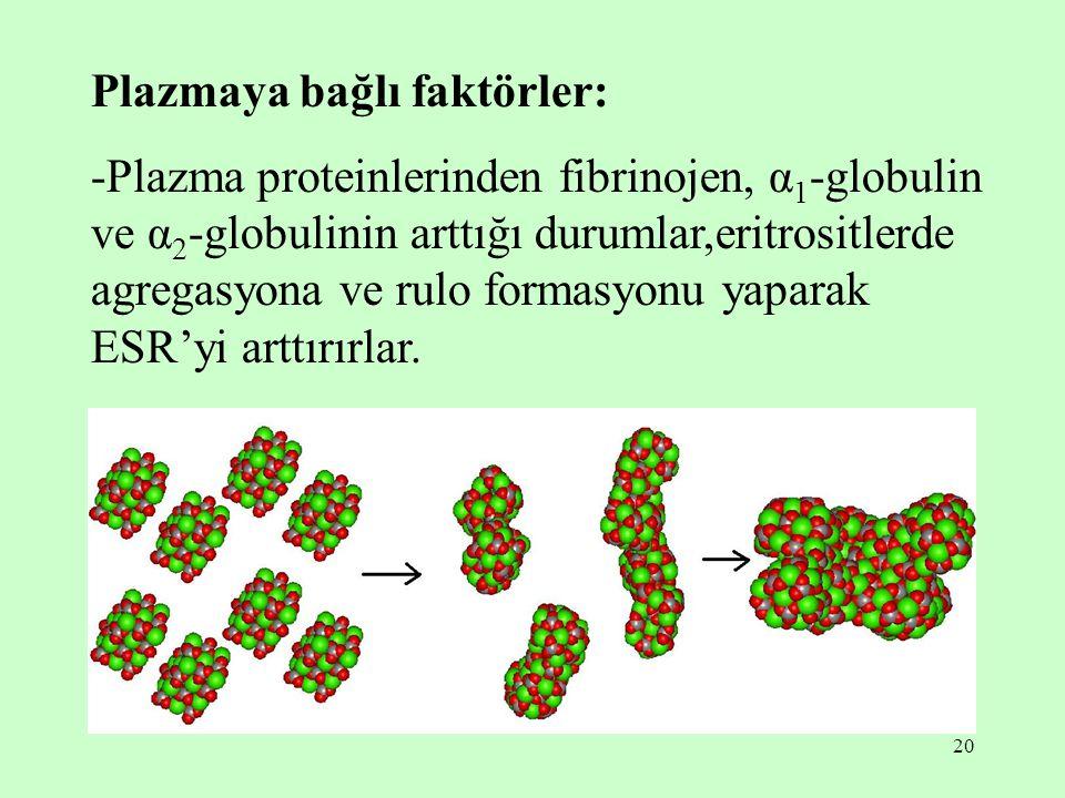 20 Plazmaya bağlı faktörler: -Plazma proteinlerinden fibrinojen, α 1 -globulin ve α 2 -globulinin arttığı durumlar,eritrositlerde agregasyona ve rulo