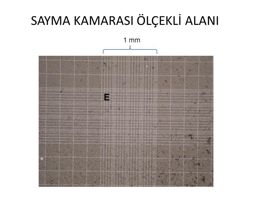 SAYMA KAMARASI ÖLÇEKLİ ALANI E 1 mm