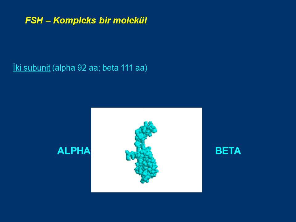 İki subunit (alpha 92 aa; beta 111 aa) FSH – Kompleks bir molekül ALPHA BETA
