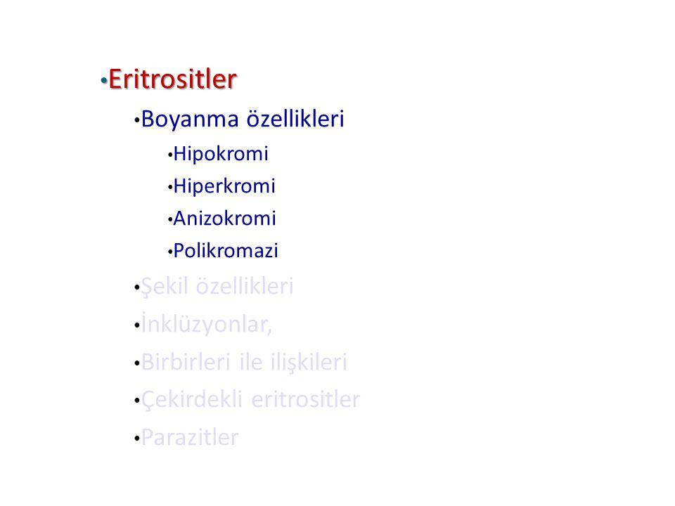 Eritrositler Eritrositler Boyanma özellikleri Hipokromi Hiperkromi Anizokromi Polikromazi Şekil özellikleri İnklüzyonlar, Birbirleri ile ilişkileri Çe