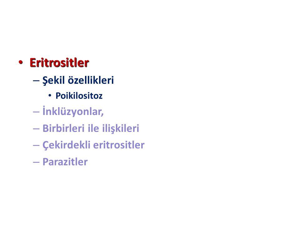 Eritrositler Eritrositler – Şekil özellikleri Poikilositoz – İnklüzyonlar, – Birbirleri ile ilişkileri – Çekirdekli eritrositler – Parazitler