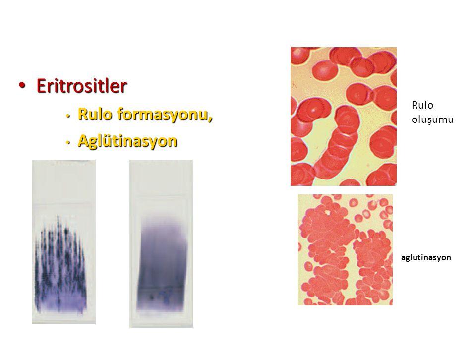 Eritrositler Eritrositler Rulo formasyonu, Rulo formasyonu, Aglütinasyon Aglütinasyon aglutinasyon Rulo oluşumu