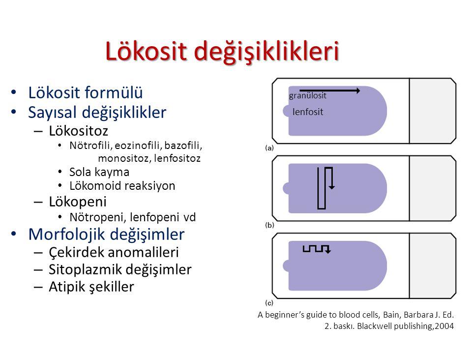 Lökosit değişiklikleri granülosit Lökosit formülü Sayısal değişiklikler – Lökositoz Nötrofili, eozinofili, bazofili, monositoz, lenfositoz Sola kayma Lökomoid reaksiyon – Lökopeni Nötropeni, lenfopeni vd Morfolojik değişimler – Çekirdek anomalileri – Sitoplazmik değişimler – Atipik şekiller lenfosit A beginner's guide to blood cells, Bain, Barbara J.