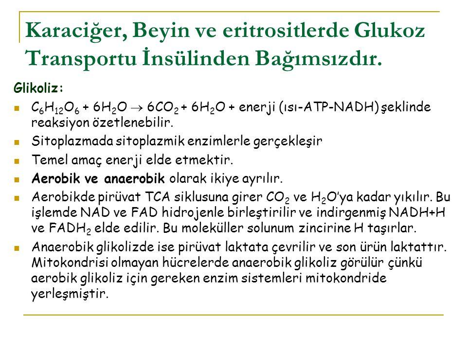 Karaciğer, Beyin ve eritrositlerde Glukoz Transportu İnsülinden Bağımsızdır. Glikoliz: C 6 H 12 O 6 + 6H 2 O  6CO 2 + 6H 2 O + enerji (ısı-ATP-NADH)
