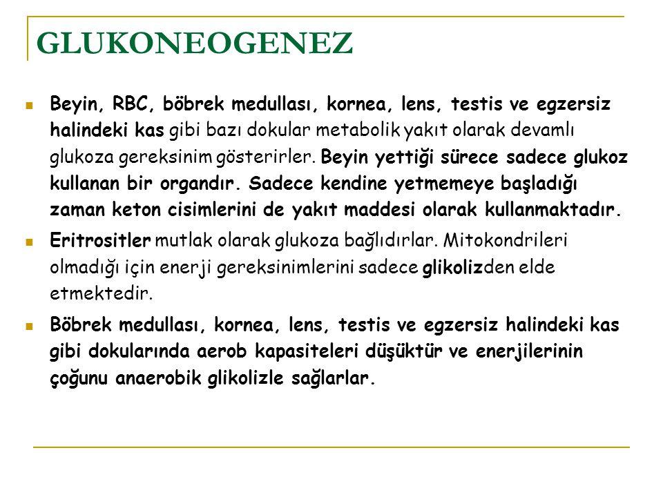 GLUKONEOGENEZ Beyin, RBC, böbrek medullası, kornea, lens, testis ve egzersiz halindeki kas gibi bazı dokular metabolik yakıt olarak devamlı glukoza ge