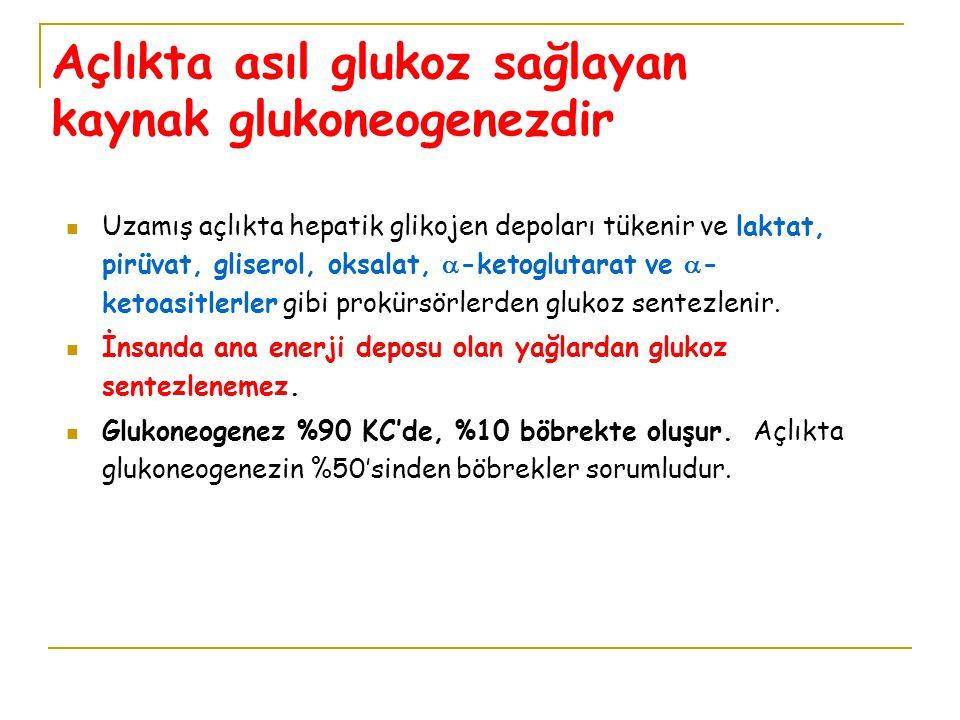Açlıkta asıl glukoz sağlayan kaynak glukoneogenezdir Uzamış açlıkta hepatik glikojen depoları tükenir ve laktat, pirüvat, gliserol, oksalat,  -ketogl