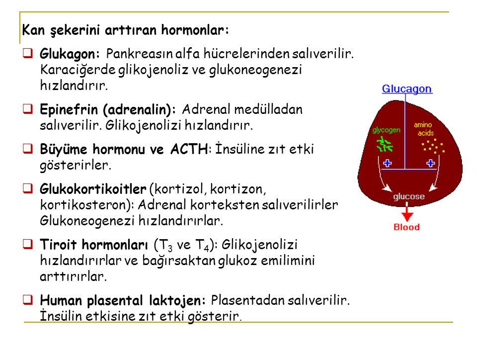Kan şekerini arttıran hormonlar:  Glukagon: Pankreasın alfa hücrelerinden salıverilir. Karaciğerde glikojenoliz ve glukoneogenezi hızlandırır.  Epin