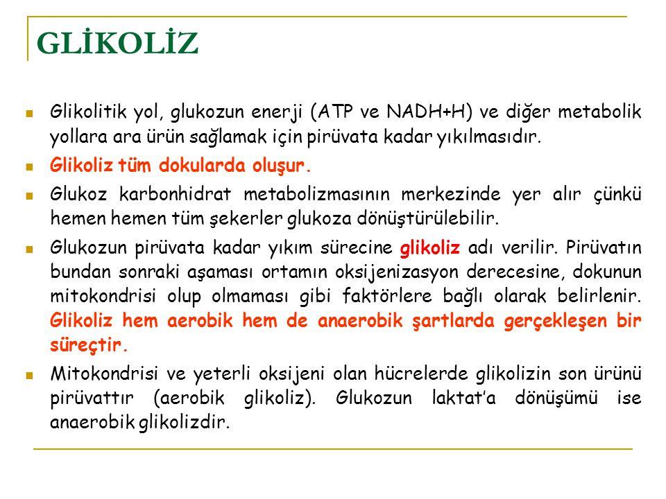GLİKOLİZ Glikolitik yol, glukozun enerji (ATP ve NADH+H) ve diğer metabolik yollara ara ürün sağlamak için pirüvata kadar yıkılmasıdır. Glikoliz tüm d