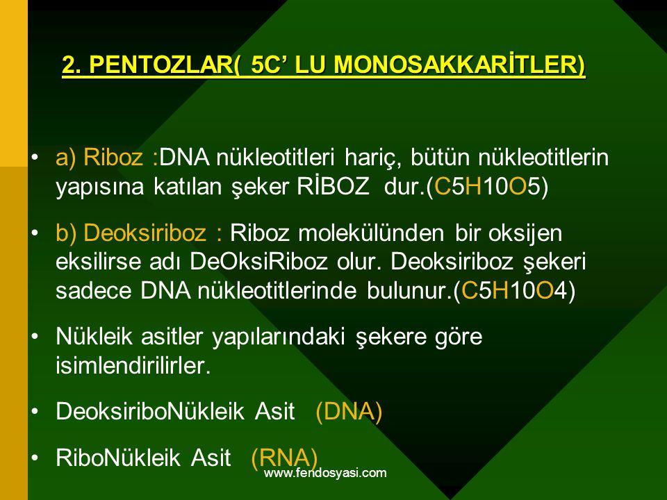 www.fendosyasi.com 2. PENTOZLAR( 5C' LU MONOSAKKARİTLER) a) Riboz :DNA nükleotitleri hariç, bütün nükleotitlerin yapısına katılan şeker RİBOZ dur.(C5H