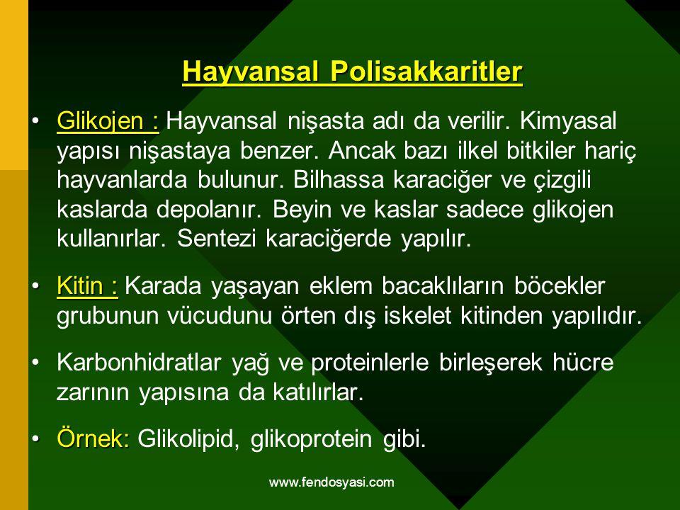 www.fendosyasi.com Hayvansal Polisakkaritler Glikojen :Glikojen : Hayvansal nişasta adı da verilir. Kimyasal yapısı nişastaya benzer. Ancak bazı ilkel