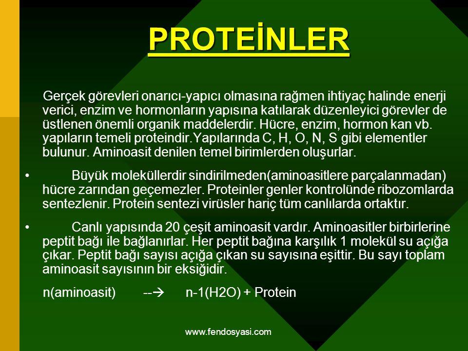 www.fendosyasi.com PROTEİNLER Gerçek görevleri onarıcı-yapıcı olmasına rağmen ihtiyaç halinde enerji verici, enzim ve hormonların yapısına katılarak d