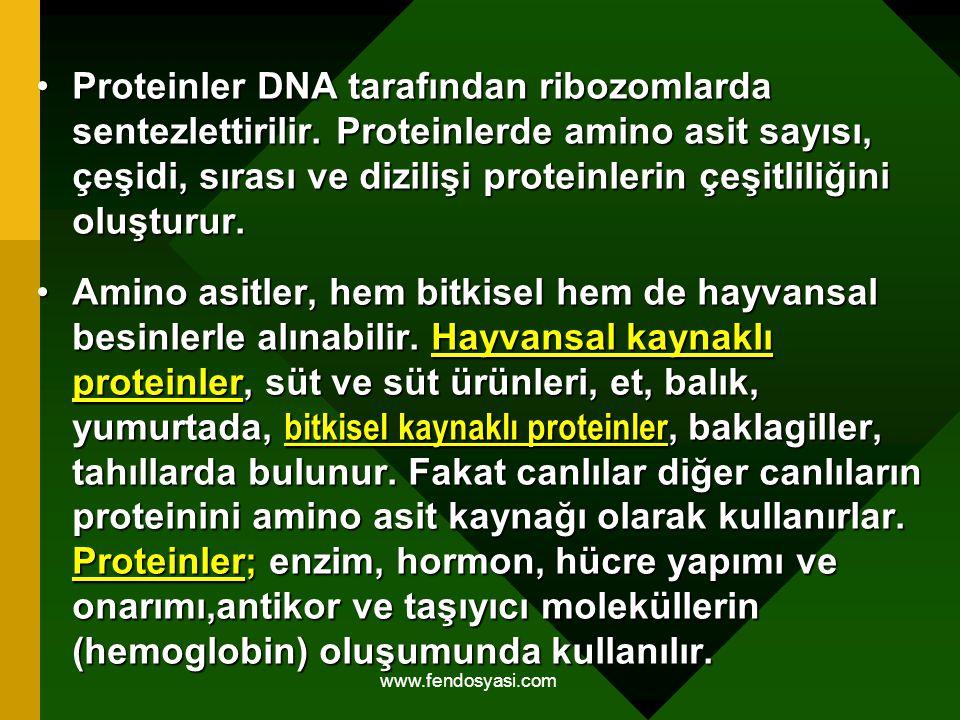 www.fendosyasi.com Proteinler DNA tarafından ribozomlarda sentezlettirilir. Proteinlerde amino asit sayısı, çeşidi, sırası ve dizilişi proteinlerin çe
