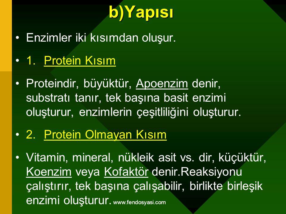 b)Yapısı Enzimler iki kısımdan oluşur. 1.Protein Kısım Proteindir, büyüktür, Apoenzim denir, substratı tanır, tek başına basit enzimi oluşturur, enzim