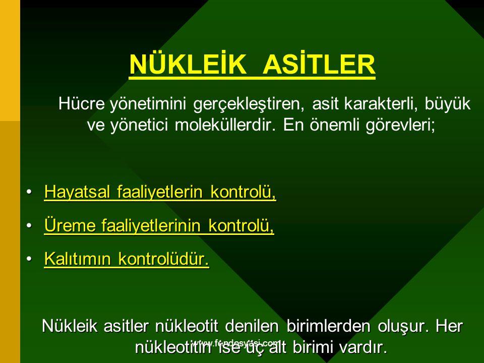 www.fendosyasi.com NÜKLEİK ASİTLER Hücre yönetimini gerçekleştiren, asit karakterli, büyük ve yönetici moleküllerdir. En önemli görevleri; Hayatsal fa