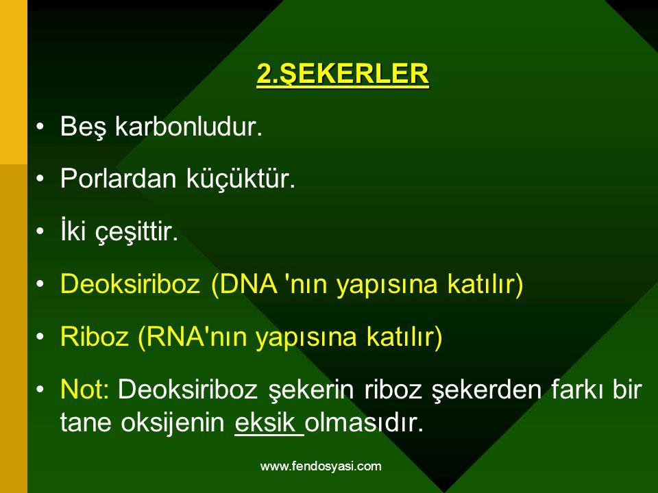 www.fendosyasi.com2.ŞEKERLER Beş karbonludur. Porlardan küçüktür. İki çeşittir. Deoksiriboz (DNA 'nın yapısına katılır) Riboz (RNA'nın yapısına katılı