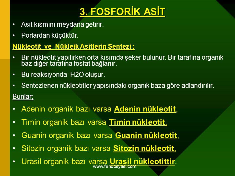 www.fendosyasi.com 3. FOSFORİK ASİT Asit kısmını meydana getirir. Porlardan küçüktür. Nükleotit ve Nükleik Asitlerin Sentezi ; Bir nükleotit yapılırke