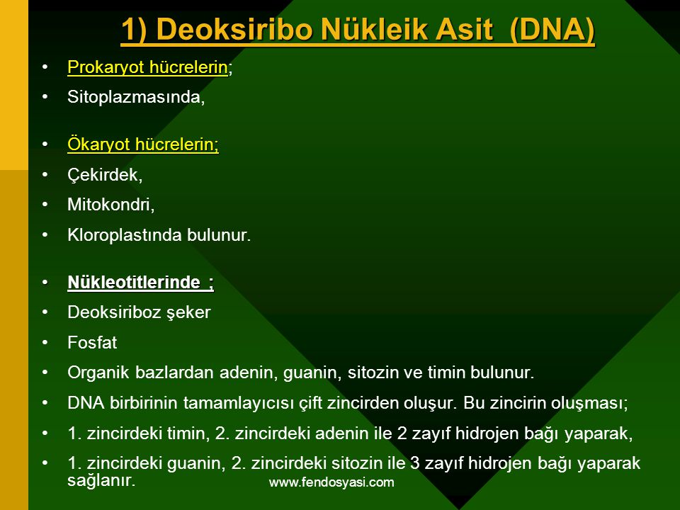 www.fendosyasi.com 1) Deoksiribo Nükleik Asit (DNA) Prokaryot hücrelerinProkaryot hücrelerin; Sitoplazmasında, Ökaryot hücrelerin;Ökaryot hücrelerin;