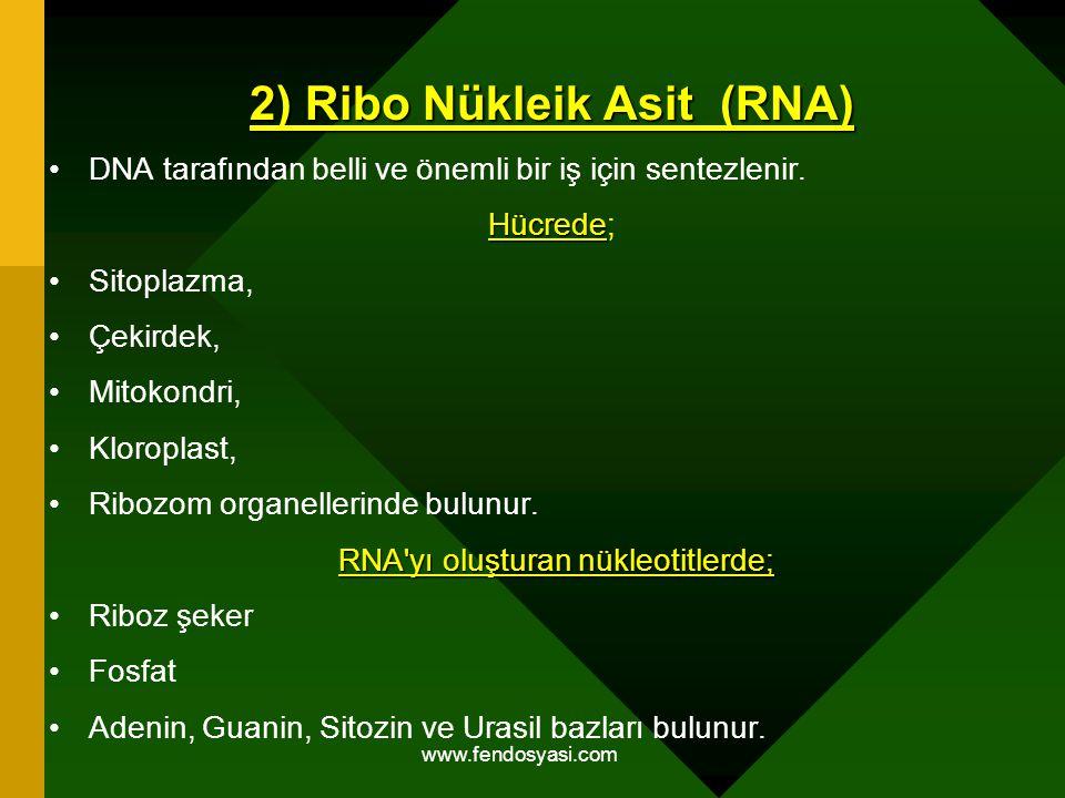 www.fendosyasi.com 2) Ribo Nükleik Asit (RNA) DNA tarafından belli ve önemli bir iş için sentezlenir. Hücrede Hücrede; Sitoplazma, Çekirdek, Mitokondr