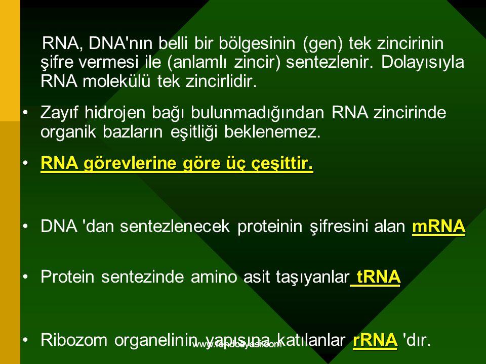 www.fendosyasi.com RNA, DNA'nın belli bir bölgesinin (gen) tek zincirinin şifre vermesi ile (anlamlı zincir) sentezlenir. Dolayısıyla RNA molekülü tek