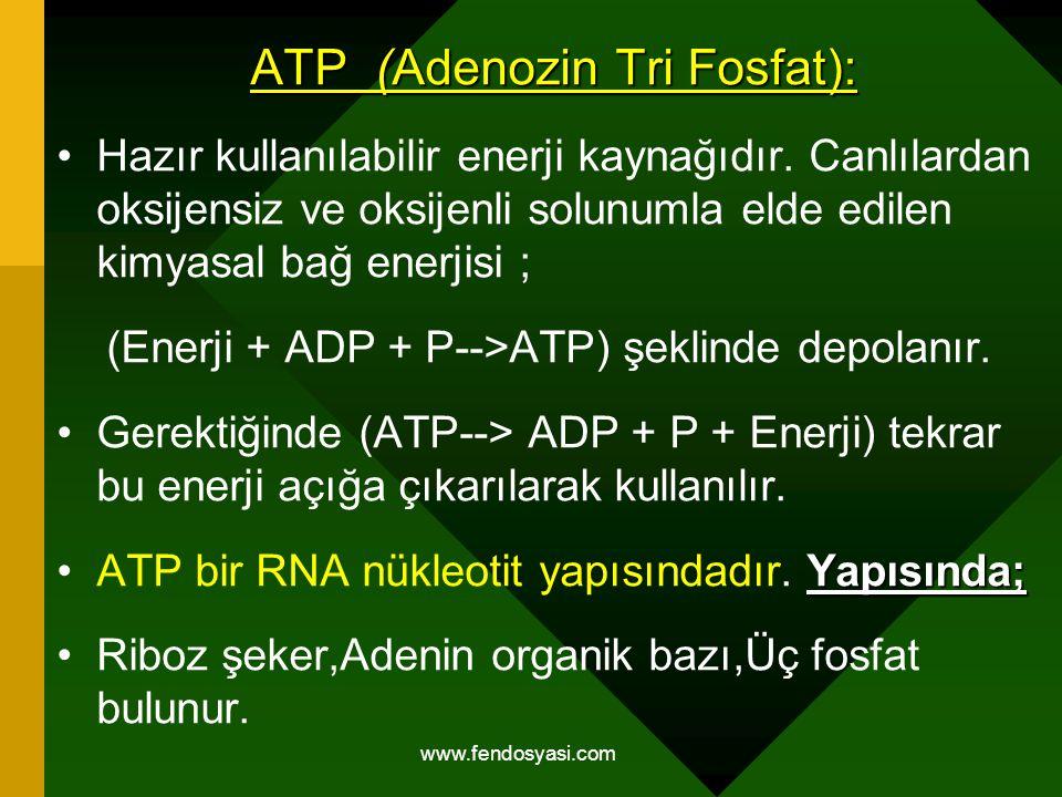 www.fendosyasi.com ATP (Adenozin Tri Fosfat): Hazır kullanılabilir enerji kaynağıdır. Canlılardan oksijensiz ve oksijenli solunumla elde edilen kimyas