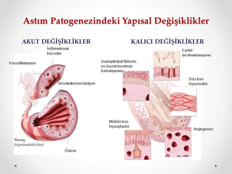 Astım Patogenezindeki Yapısal Değişiklikler Vazodilatasyon İnflamatuvar hücreler Ödem Epitel deskuamasyonu Düz kas hipertrofisi Subepitelyal fibrozis