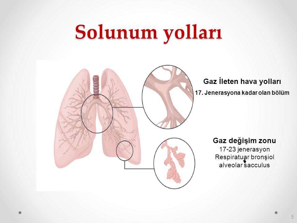 5 Solunum yolları Gaz İleten hava yolları 17. Jenerasyona kadar olan bölüm Gaz değişim zonu 17-23 jenerasyon Respiratuar bronşiol alveolar sacculus