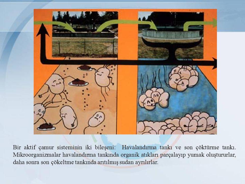 Bir aktif çamur sisteminin iki bileşeni: Havalandırma tankı ve son çöktürme tankı. Mikroorganizmalar havalandırma tankında organik atıkları parçalayıp