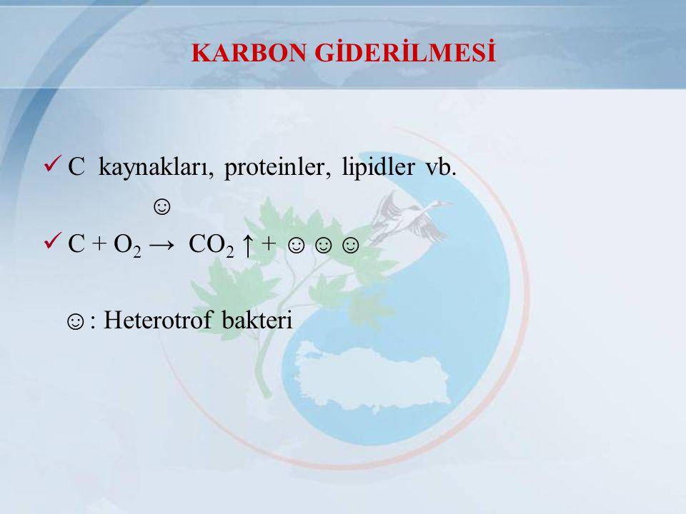 KARBON GİDERİLMESİ C kaynakları, proteinler, lipidler vb. ☺ C + O 2 → CO 2 ↑ + ☺☺☺ ☺: Heterotrof bakteri