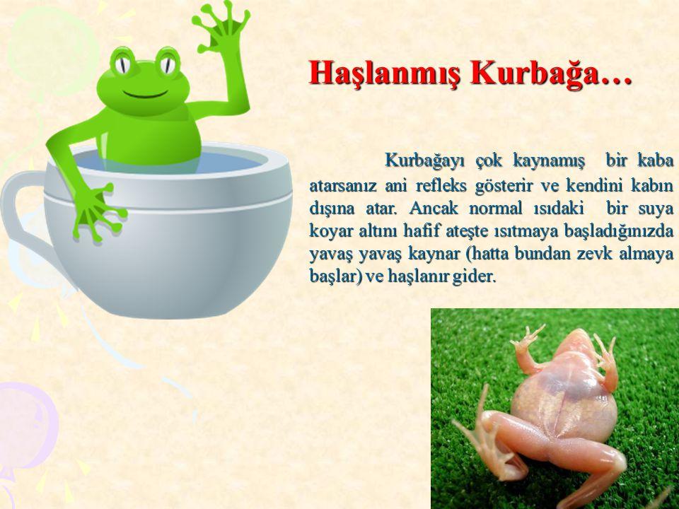 Kurbağayı çok kaynamış bir kaba atarsanız ani refleks gösterir ve kendini kabın dışına atar. Ancak normal ısıdaki bir suya koyar altını hafif ateşte ı