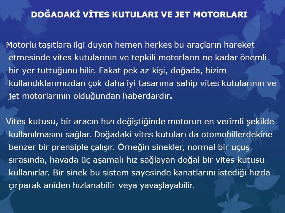 DOĞADAKİ VİTES KUTULARI VE JET MOTORLARI Motorlu taşıtlara ilgi duyan hemen herkes bu araçların hareket etmesinde vites kutularının ve tepkili motorla