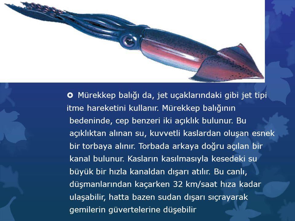  Mürekkep balığı da, jet uçaklarındaki gibi jet tipi itme hareketini kullanır. Mürekkep balığının bedeninde, cep benzeri iki açıklık bulunur. Bu açık