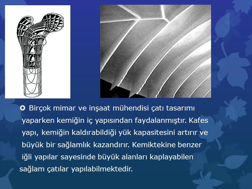  Birçok mimar ve inşaat mühendisi çatı tasarımı yaparken kemiğin iç yapısından faydalanmıştır. Kafes yapı, kemiğin kaldırabildiği yük kapasitesini ar