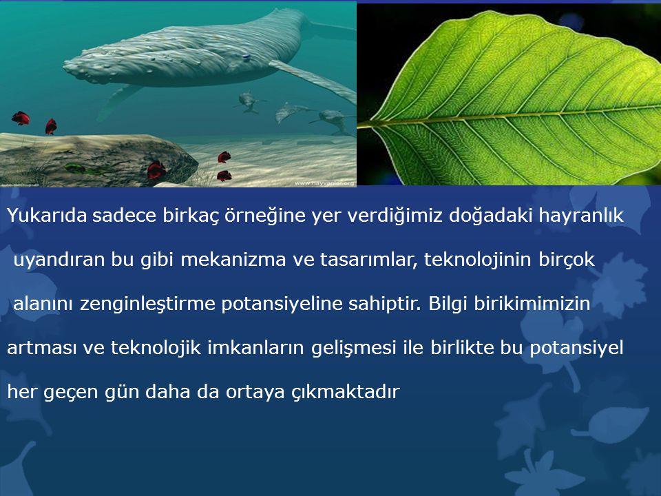  Mürekkep balığı da, jet uçaklarındaki gibi jet tipi itme hareketini kullanır.