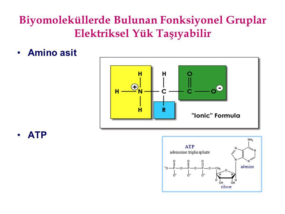 Biyomoleküllerde Bulunan Fonksiyonel Gruplar Elektriksel Yük Taşıyabilir Amino asit ATP