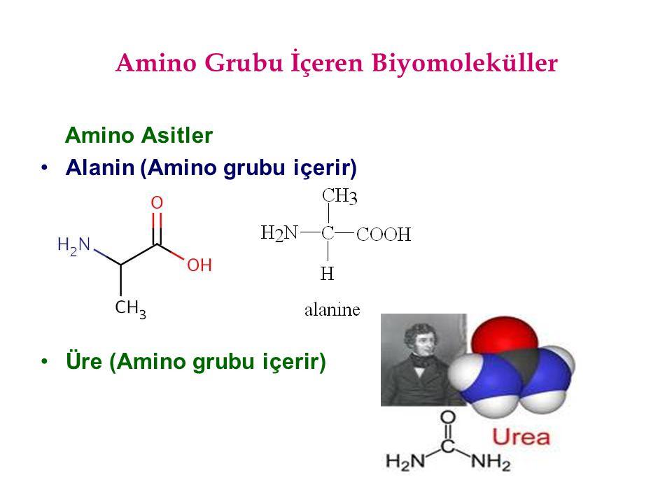 Amino Grubu İçeren Biyomoleküller Amino Asitler Alanin (Amino grubu içerir) Üre (Amino grubu içerir)