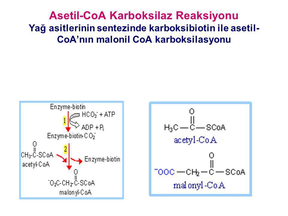 Asetil-CoA Karboksilaz Reaksiyonu Yağ asitlerinin sentezinde karboksibiotin ile asetil- CoA'nın malonil CoA karboksilasyonu