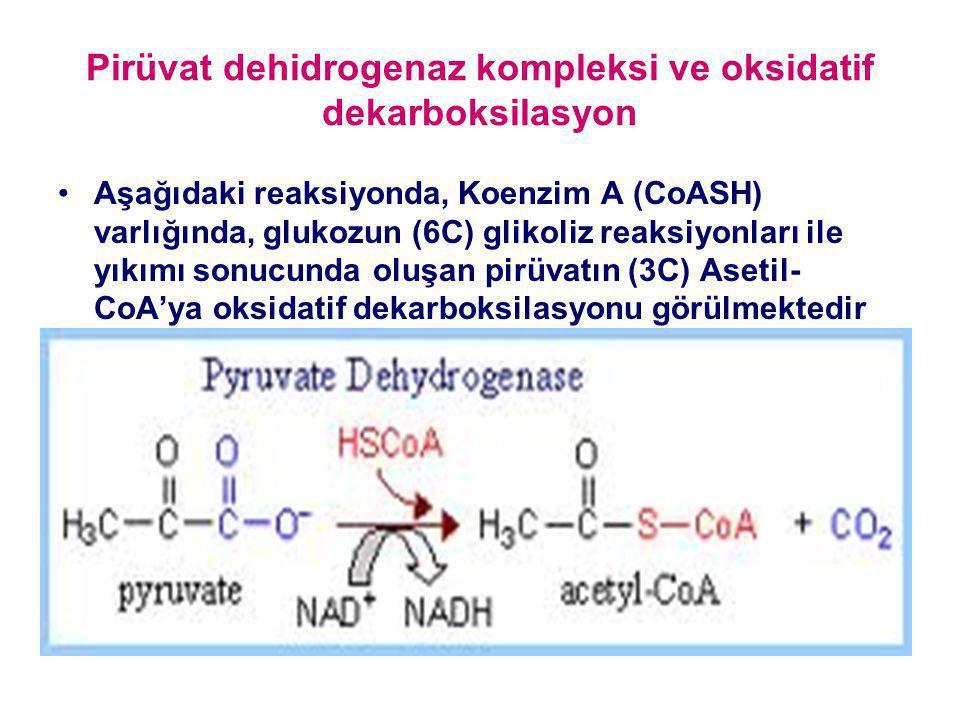 Pirüvat dehidrogenaz kompleksi ve oksidatif dekarboksilasyon Aşağıdaki reaksiyonda, Koenzim A (CoASH) varlığında, glukozun (6C) glikoliz reaksiyonları