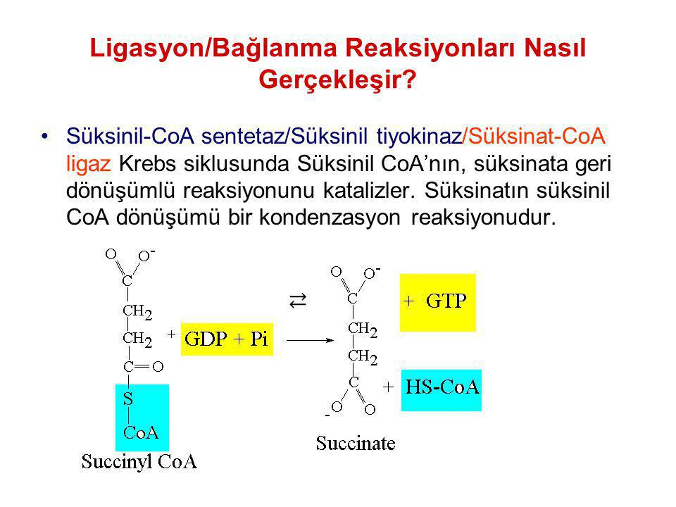 Ligasyon/Bağlanma Reaksiyonları Nasıl Gerçekleşir? Süksinil-CoA sentetaz/Süksinil tiyokinaz/Süksinat-CoA ligaz Krebs siklusunda Süksinil CoA'nın, süks
