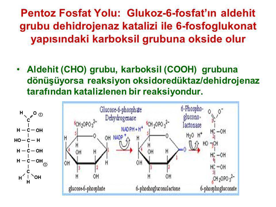 Pentoz Fosfat Yolu: Glukoz-6-fosfat'ın aldehit grubu dehidrojenaz katalizi ile 6-fosfoglukonat yapısındaki karboksil grubuna okside olur Aldehit (CHO)