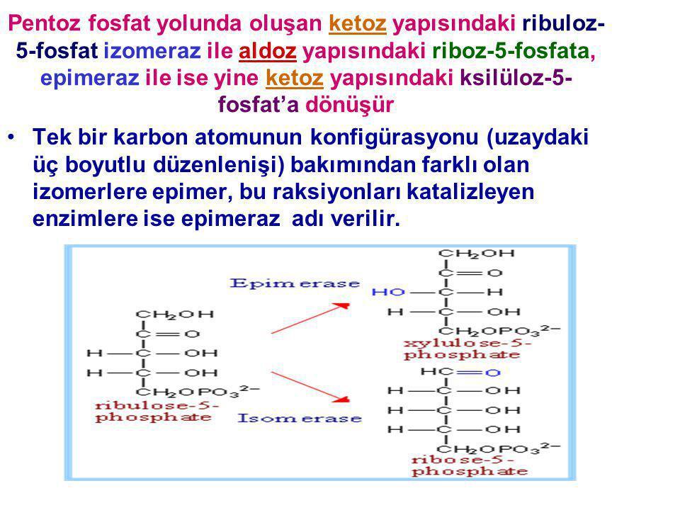 Pentoz fosfat yolunda oluşan ketoz yapısındaki ribuloz- 5-fosfat izomeraz ile aldoz yapısındaki riboz-5-fosfata, epimeraz ile ise yine ketoz yapısında