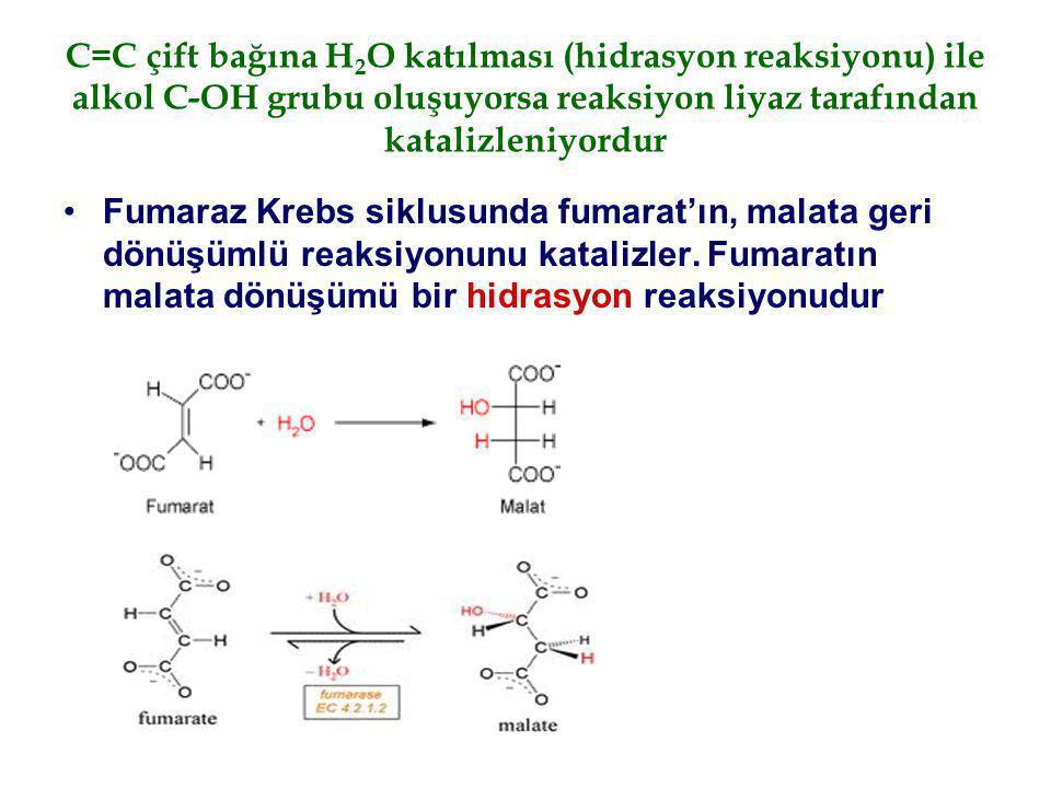 C=C çift bağına H 2 O katılması (hidrasyon reaksiyonu) ile alkol C-OH grubu oluşuyorsa reaksiyon liyaz tarafından katalizleniyordur Fumaraz Krebs sikl