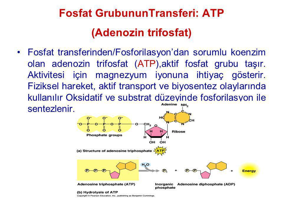 Fosfat transferinden/Fosforilasyon'dan sorumlu koenzim olan adenozin trifosfat (ATP),aktif fosfat grubu taşır. Aktivitesi için magnezyum iyonuna ihtiy