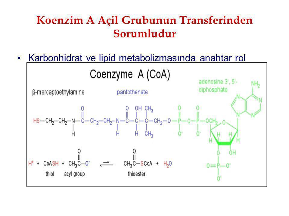 Koenzim A Açil Grubunun Transferinden Sorumludur Karbonhidrat ve lipid metabolizmasında anahtar rol oynar
