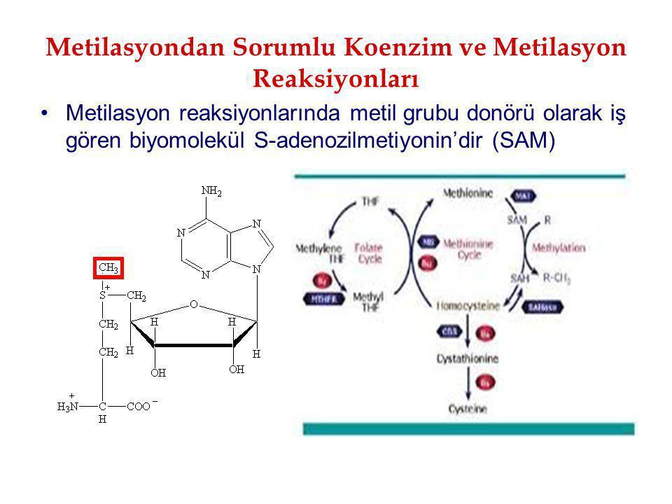 Metilasyondan Sorumlu Koenzim ve Metilasyon Reaksiyonları Metilasyon reaksiyonlarında metil grubu donörü olarak iş gören biyomolekül S-adenozilmetiyon