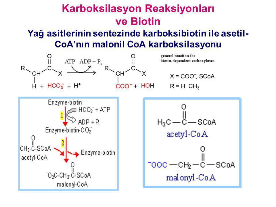 Karboksilasyon Reaksiyonları ve Biotin Yağ asitlerinin sentezinde karboksibiotin ile asetil- CoA'nın malonil CoA karboksilasyonu