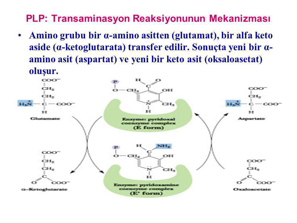 PLP: Transaminasyon Reaksiyonunun Mekanizması Amino grubu bir α-amino asitten (glutamat), bir alfa keto aside (α-ketoglutarata) transfer edilir. Sonuç