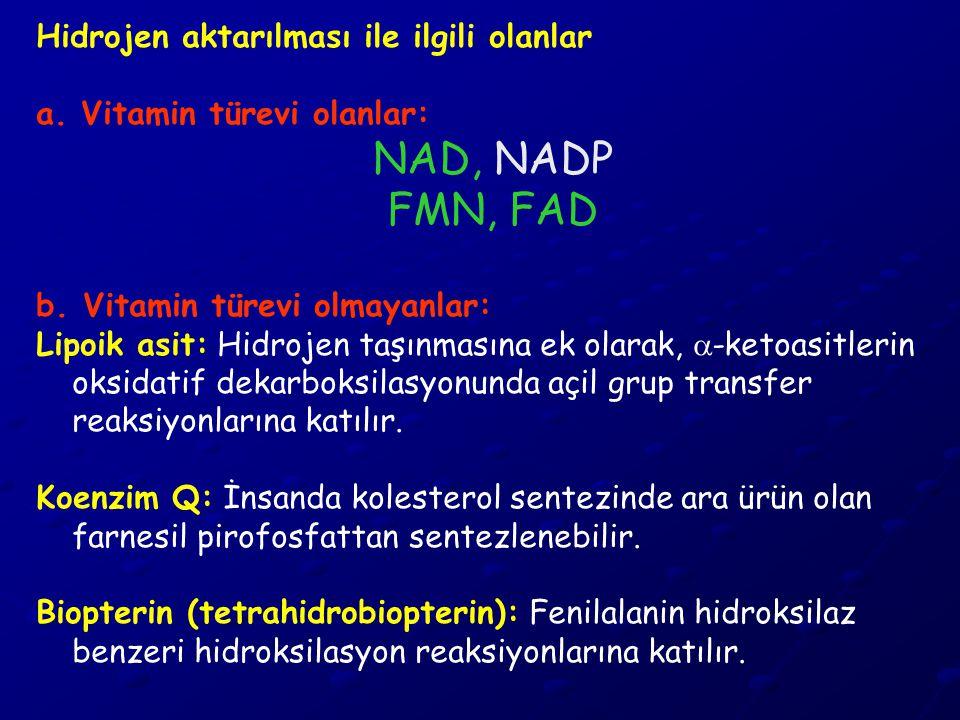 Hidrojen aktarılması ile ilgili olanlar a. Vitamin türevi olanlar: NAD, NADP FMN, FAD b. Vitamin türevi olmayanlar: Lipoik asit: Hidrojen taşınmasına
