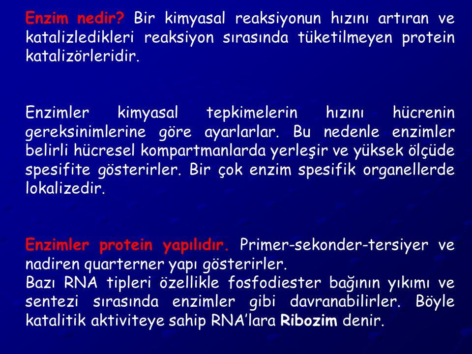 Aktif bölge: Enzim moleküllerinde aktif bölge denilen özel bir cep veya yuva bulunur.
