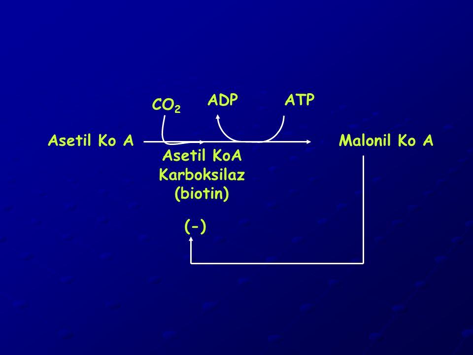 (-) Asetil KoA Karboksilaz (biotin) ATPADP Asetil Ko A CO 2 Malonil Ko A